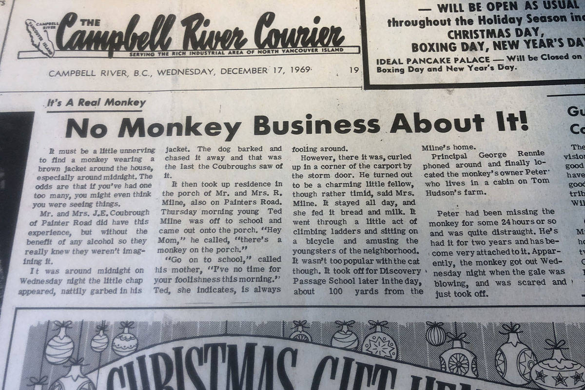 An article published Dec. 17 1969 in the now-defunct Campbell River Courier describes the escapades of a 'charming but timid' monkey wearing a brown jacket. Image courtesy Museum at Campbell River