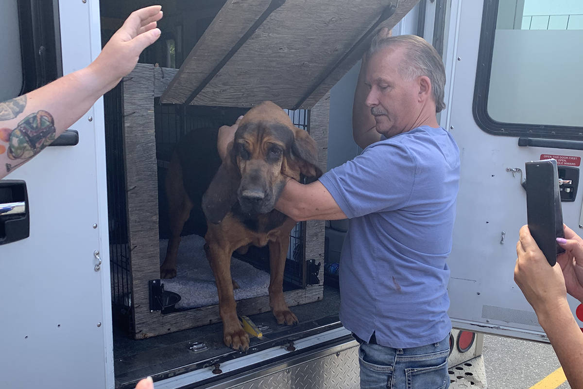 Al MacLellan with Petsearchers Canada and bloodhound Fargo arrived in Chilliwack on July 15, 2019 to help look for missing senior Grace Baranyk. (Paul Henderson/ The Progress)