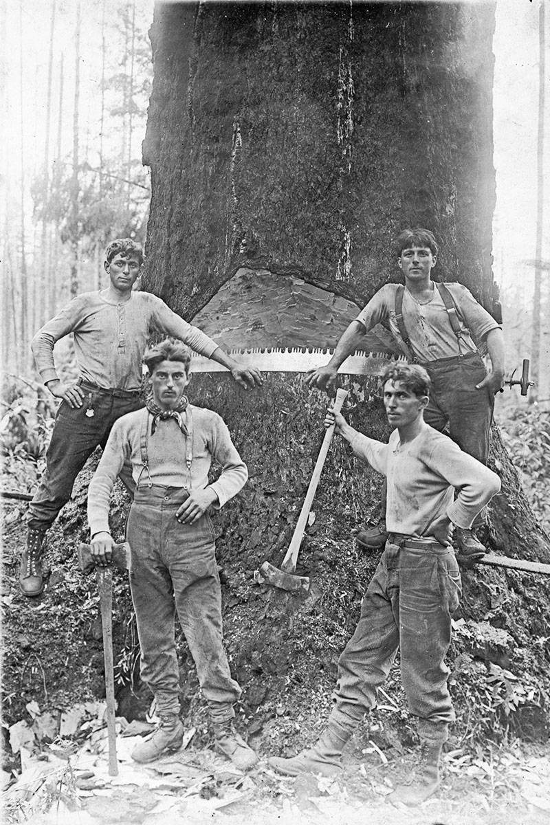 Four men posed while logging in Murrayville in the 1910s. (Langley Centennial Museum photo)