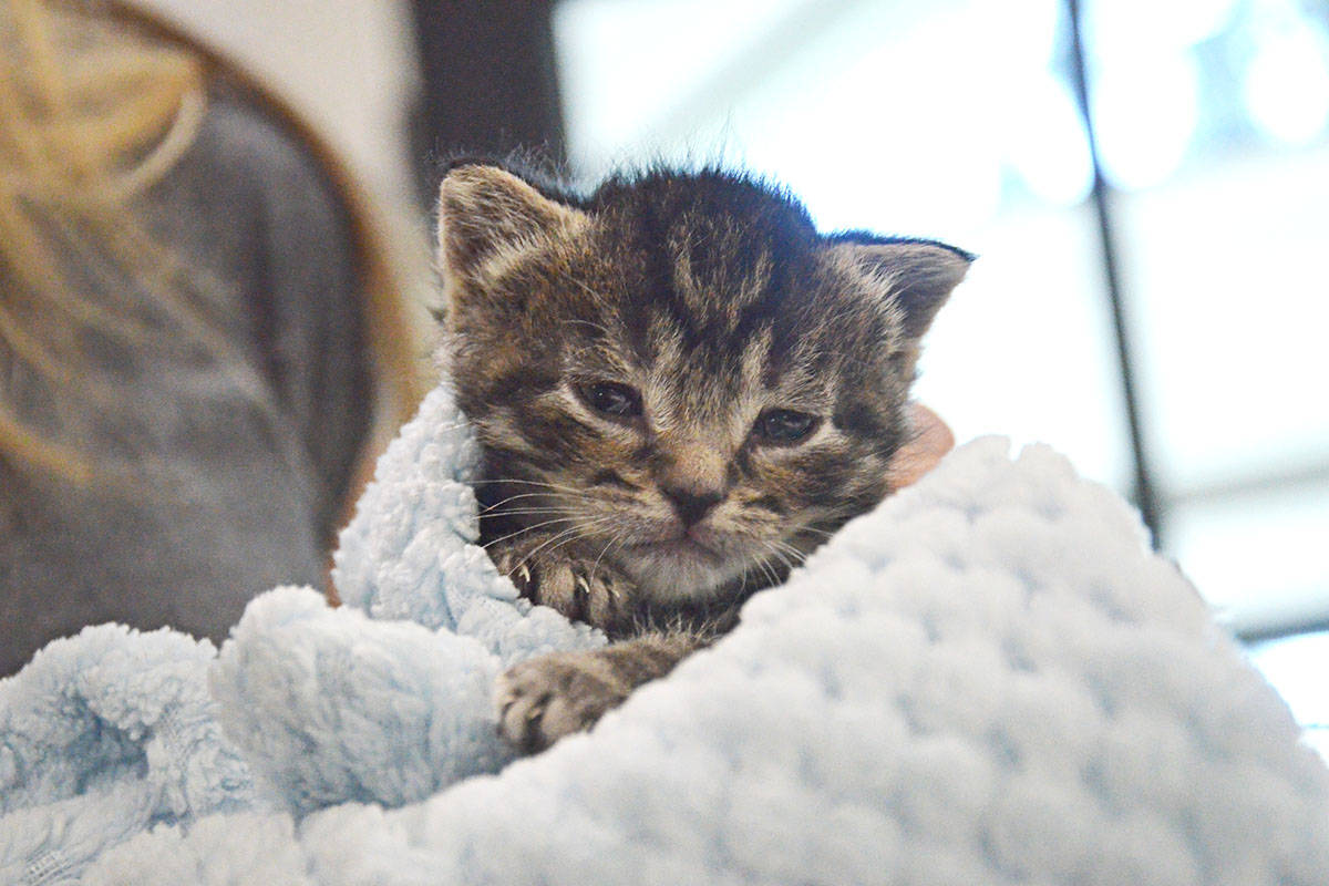 TinyKittens YouTube success fuels more cat rescue efforts