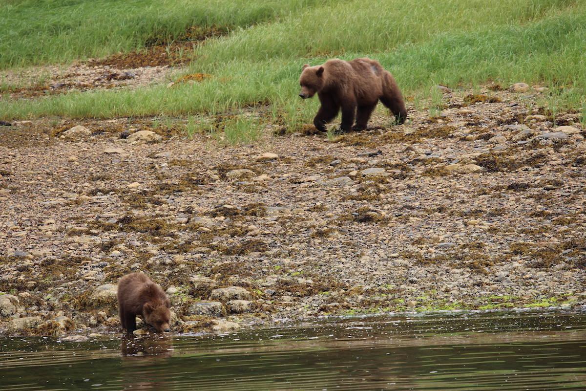 Khutzeymateen Grizzly Bear Sanctuary. Jenna Cocullo/Black Press