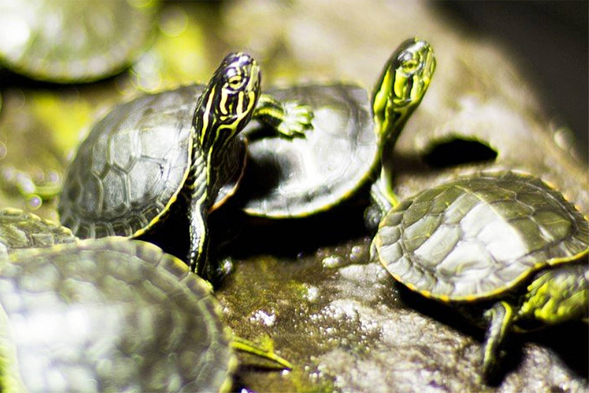 Slow, steady or spry, lace up and DASH to help endangered species