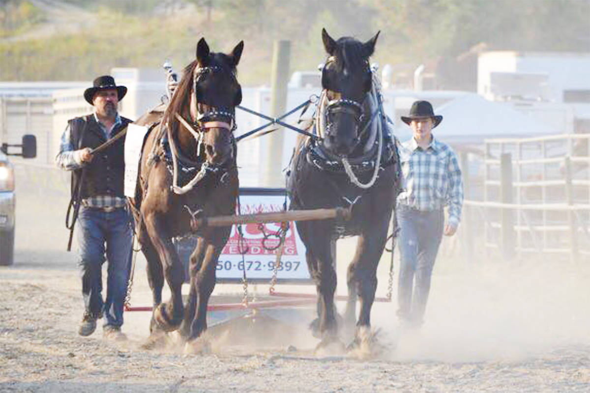 Brad Cameron, left, leads horses Duke and Max with son Ben. Max died from a heart attack after being panicked by a passing driver on a narrow country road July 27, 2019. (Photo submitted)