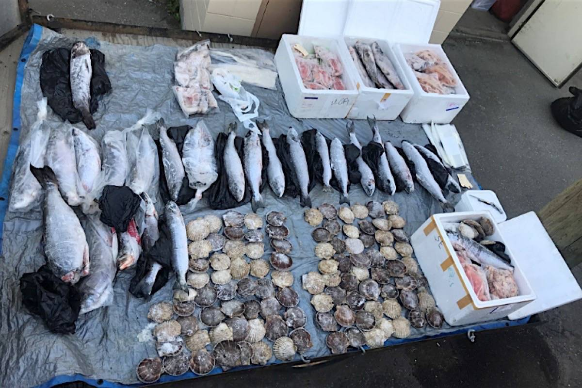 Illegally caught salmon, cod, shellfish and other seafood seized in the Skeena region. (B.C. Conservation Officer Service)