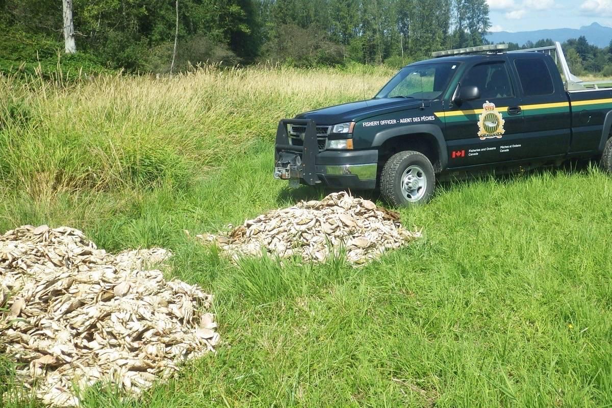 Putrid pile of crabs found rotting in Maple Ridge farmer's field