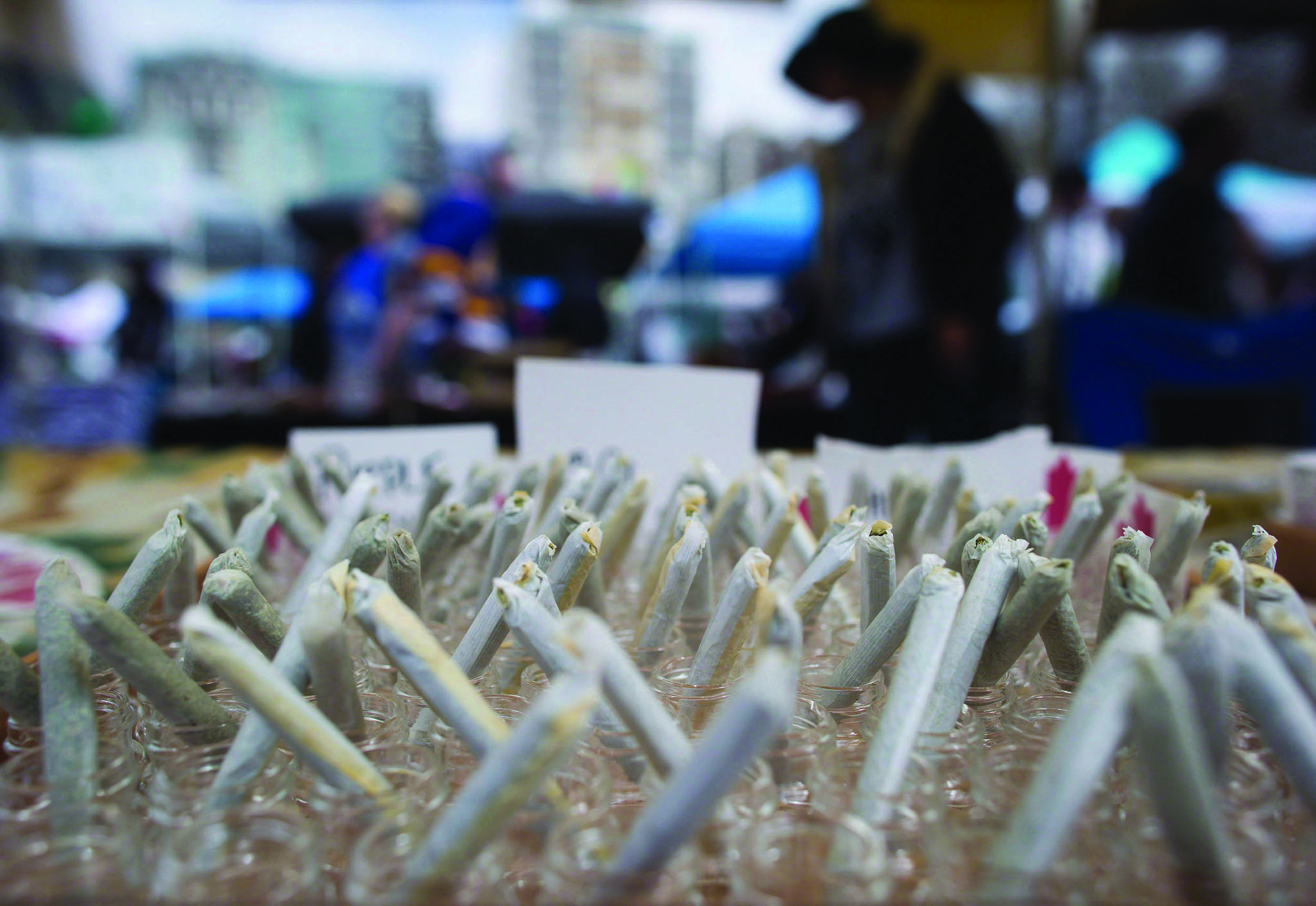 Weeding out the competition: Grand Forks to host cannabis contest at fall fair