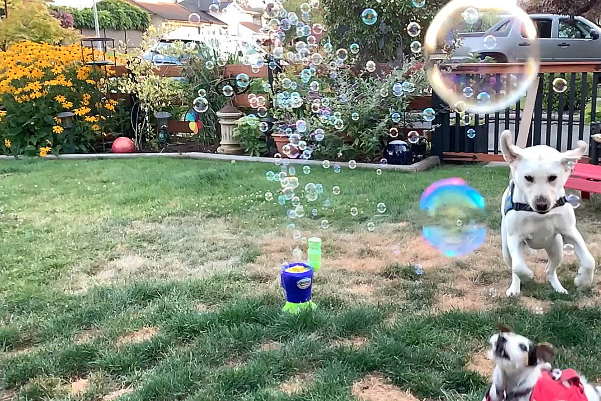 VIDEO: Bubblemania in the burbs