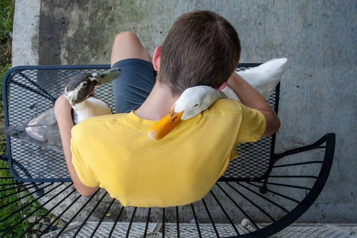 Dylan Dyke, a 12-year-old boy with autism, spends time with his ducks, Nibbles, left, and Bill, outside his home in Michigan on Aug. 2, 2018. (Cory Morse/The Grand Rapids Press via AP)