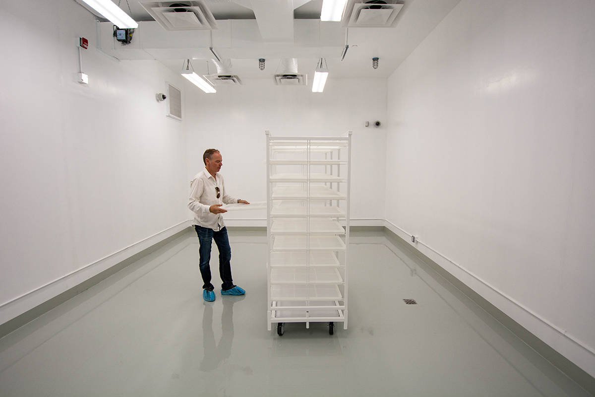 True Leaf CEO Darcy Bomford replaces a tray in the drying room of his empty cannabis facility in Lumby, B.C. (Nick Laba/Black Press Media)