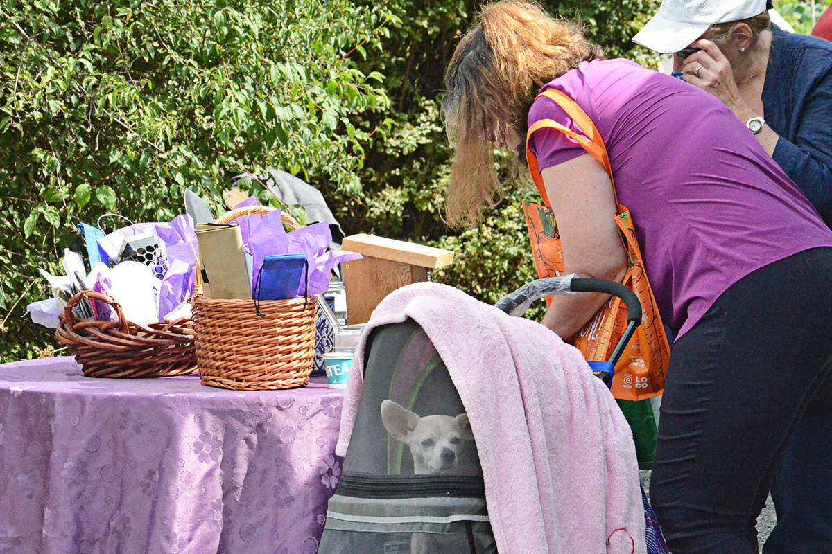 Several hundred people, and a few four-legged friends, attend the annual Blackberry Bake-off Thursday. (Heather Colpitts/Langley Advance Times)