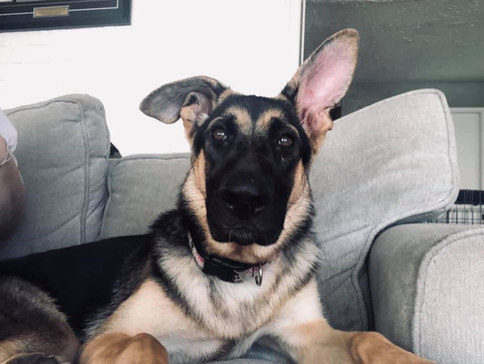 Bella ready to listen. (Mogan McLean)