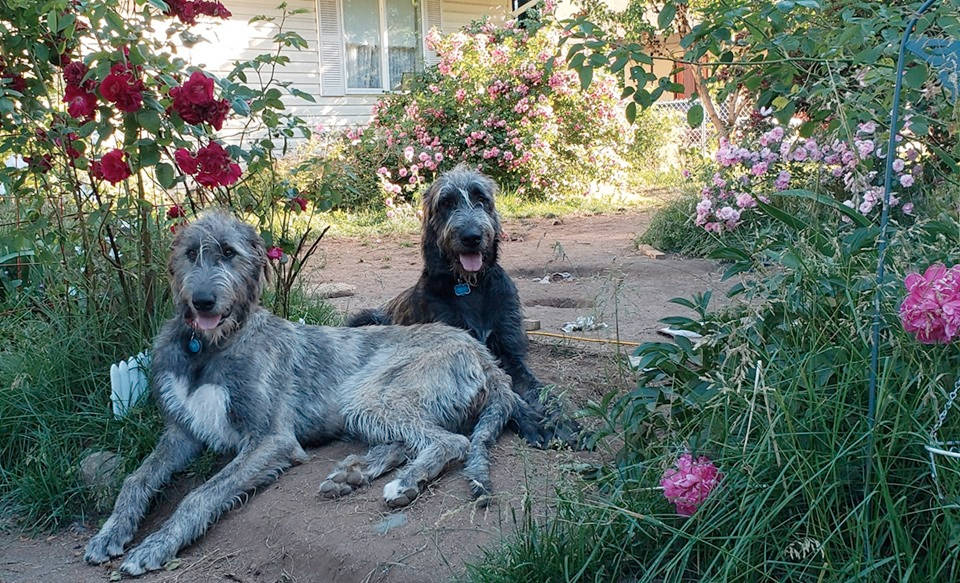 Willow and Odin hanging out in the garden. (Sarah Preson)