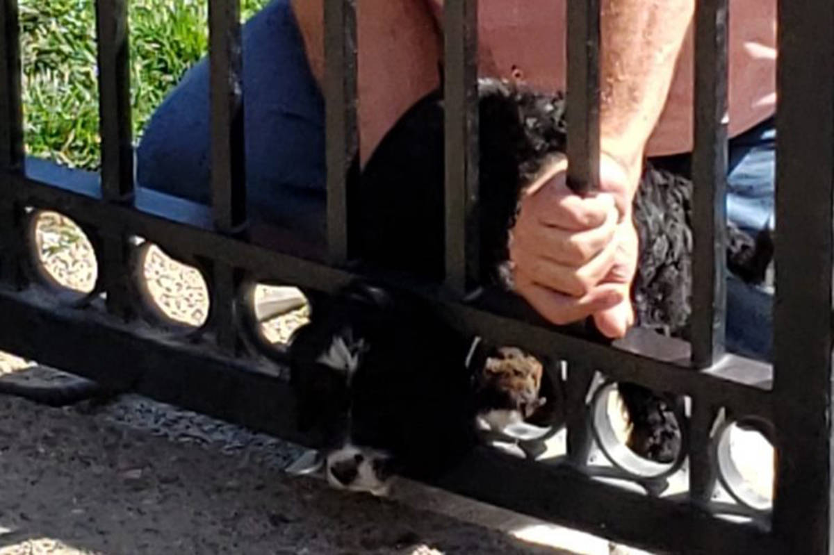 Sophia, an 8-week-old Bernese cross puppy, managed to insert her head into the bottom of a wrought iron fence with a perfect puppy-head-shaped hole. (Juan De Fuca Veterinary Clinic/Facebook)