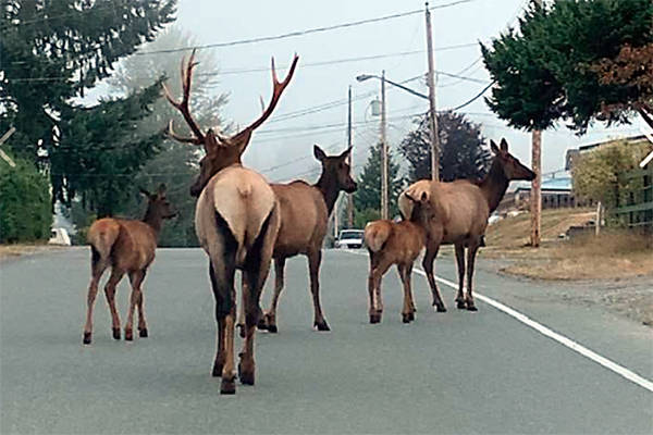 The big fellow is making sure no one gets lost as they take a stroll along Johel Road in Lake Cowichan. (Kristy Convery photo)