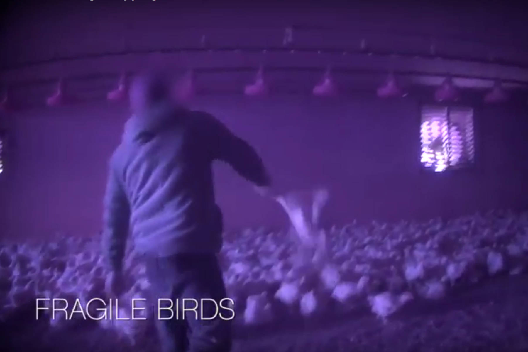 A worker employed by a Chilliwack-based agricultural employer seen throwing a chicken in an undercover video filmed by Mercy For Animals in 2017.