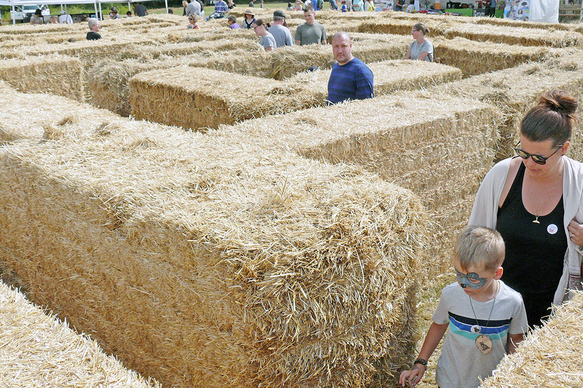 The hay bale maze is a popular attraction at the Country Celebration in Langley's Campbell Valley Park. (Dan Ferguson/Langley Advance Times)
