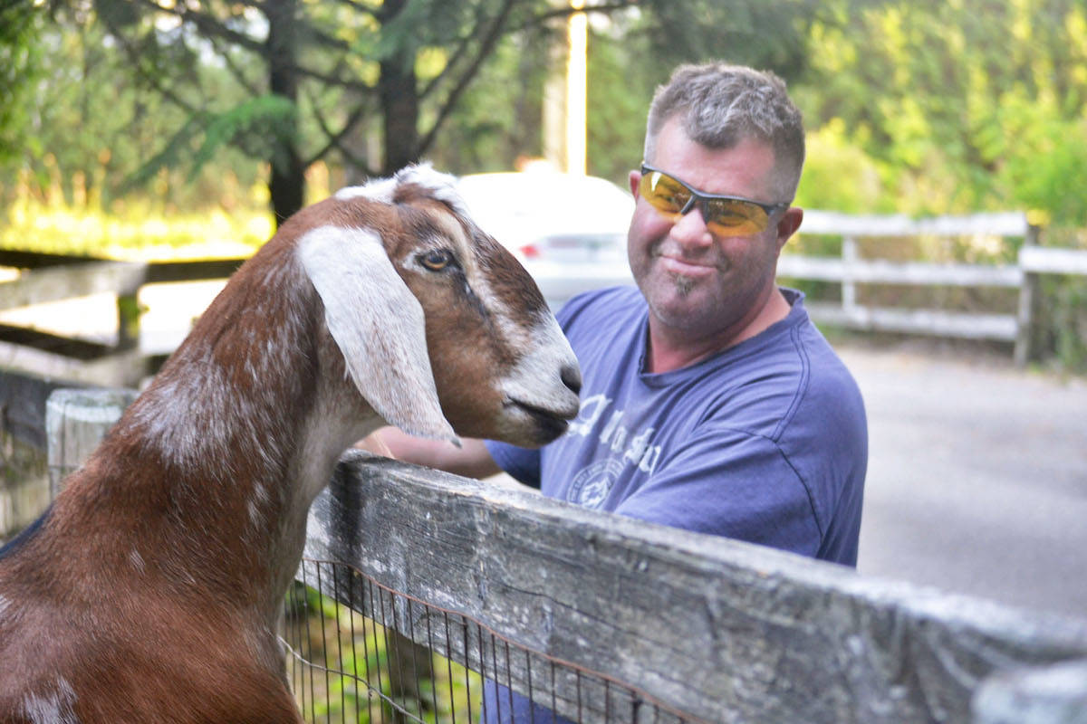 Aldergrove resident Eric Mai Lhot has employed the herd to clear his three-acre hobby farm, which is currently unusable due to years of blackerry bush and vegetation overgrowth. (Sarah Grochowski)