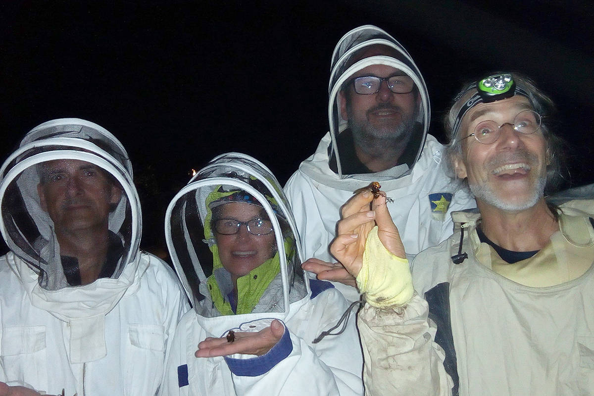 Beekeepers John Holubeshen, left, Moufida Holubeshen, Peter Lange and Conrad Berube took down a nest of Asian giant hornets on Wednesday night behind Robins Park in Nanaimo. (Photo submitted)