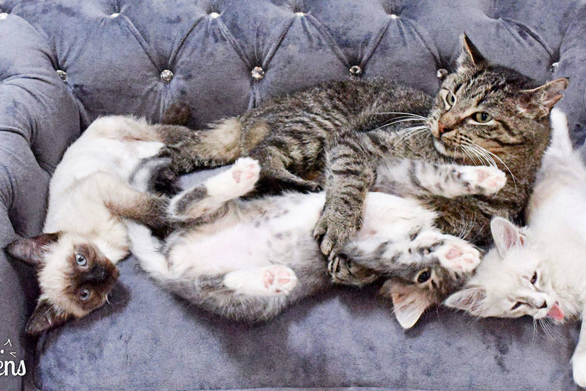 Grandpa Mason was an elderly feral cat taken in by TinyKittens. He found his calling when he started caring for the kittens in the care of the animal welfare organization. (Facebook photo)