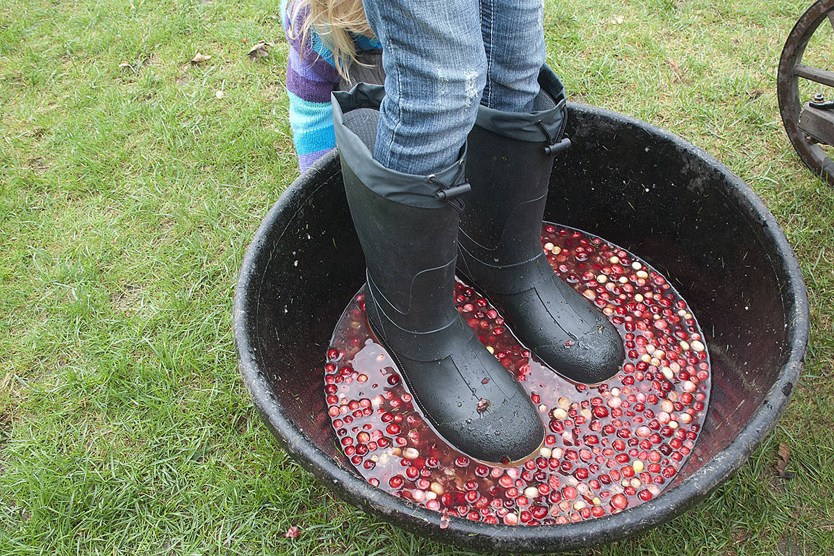 Fort Langley celebrates two dozen years of millions of cranberries