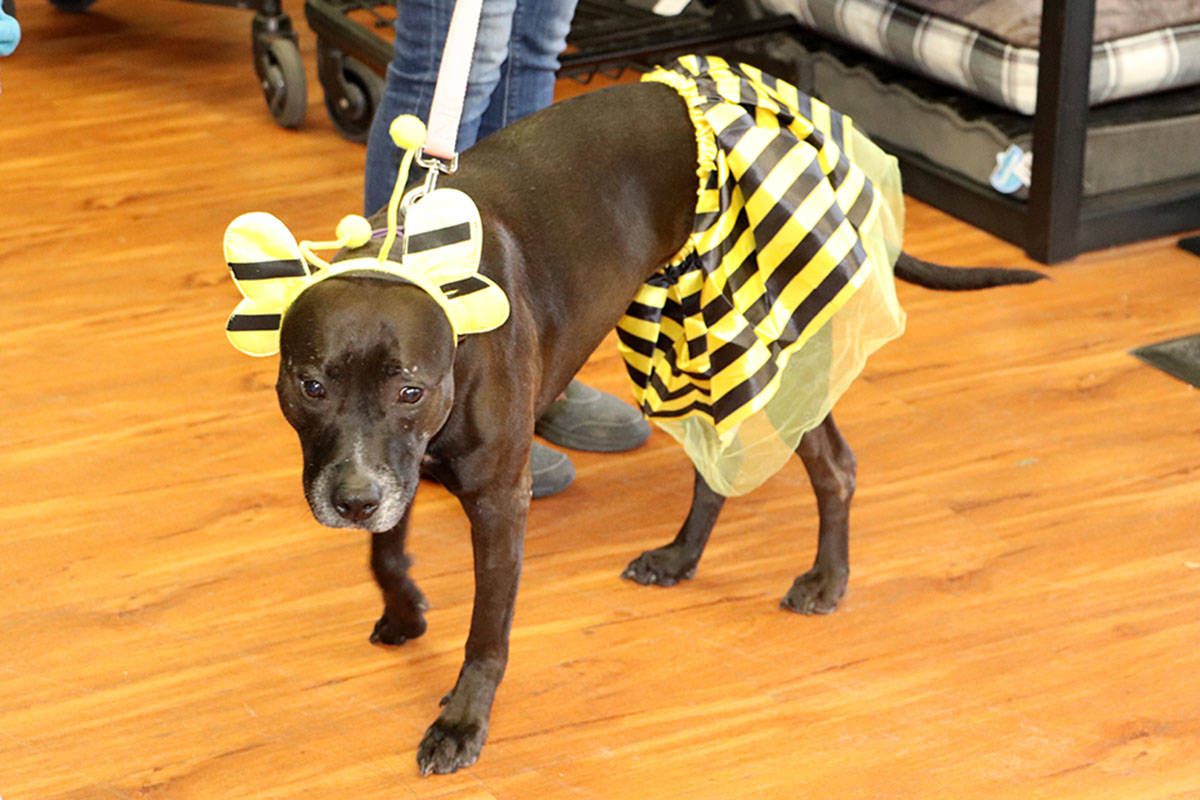 A happy Thanksgiving for 'bully breed' dog rescue