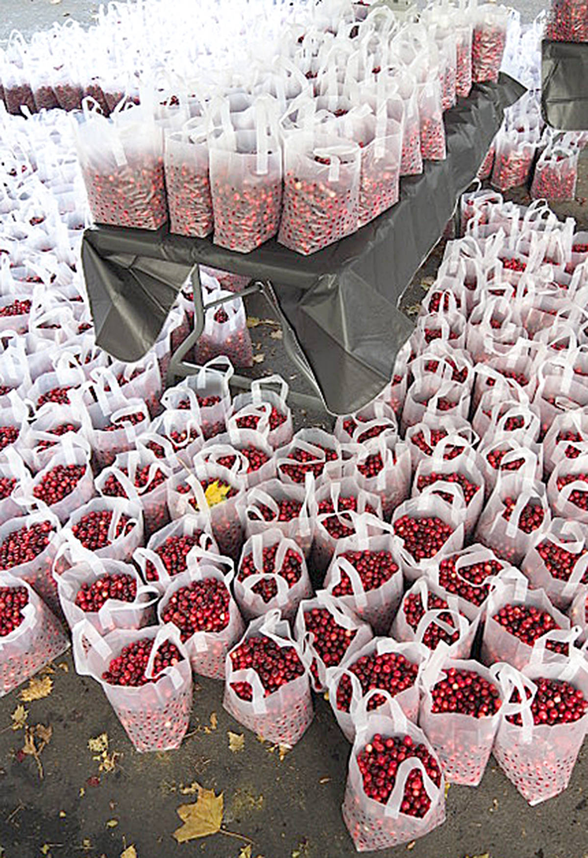 """Several spectators from this year's Cranberry Festival shared their thoughts on the event, including Jim Orlowski, who was paritcularly impressed by the """"old dues"""" entertainin in front of Eighteen 27. (Jim Orlowski/Special to the Langley Advance Times)"""