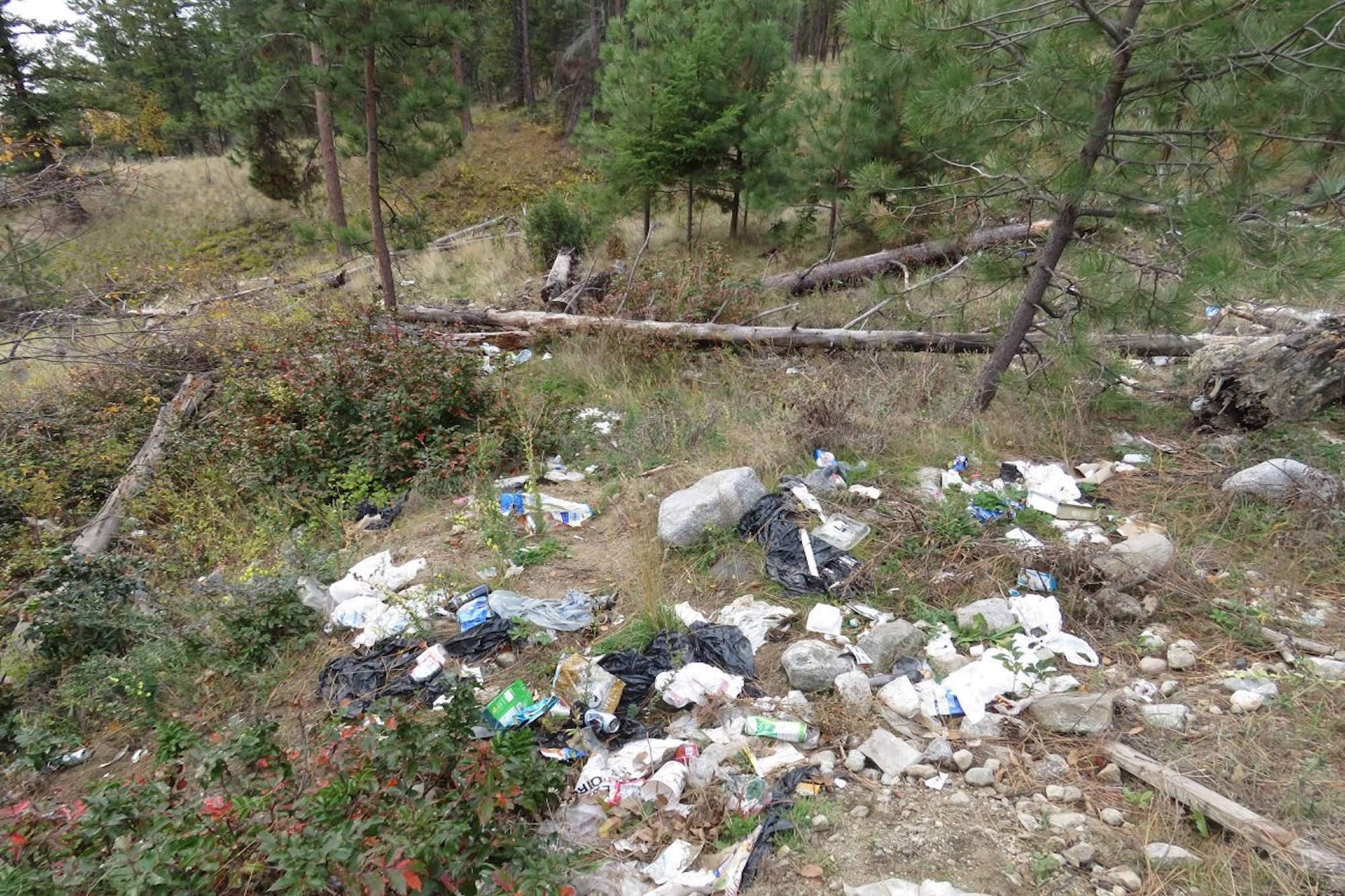 West Kelowna business facing charges after six bears killed over littering