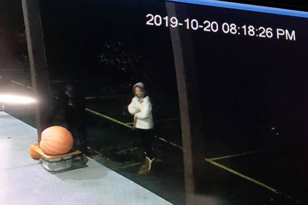 Security footage from Oliver's Sunview Market show a man and a woman stealing the store's 100 lb pumpkin on Oct. 20 at approximately 8:20 p.m. The store is asking residents to be on the lookout for either individuals or the pumpkin. (Photo from Facebook)