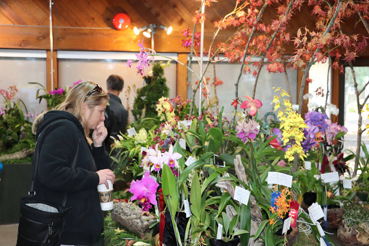 VIDEO: Fraser Valley Orchid Society fall show a blooming success