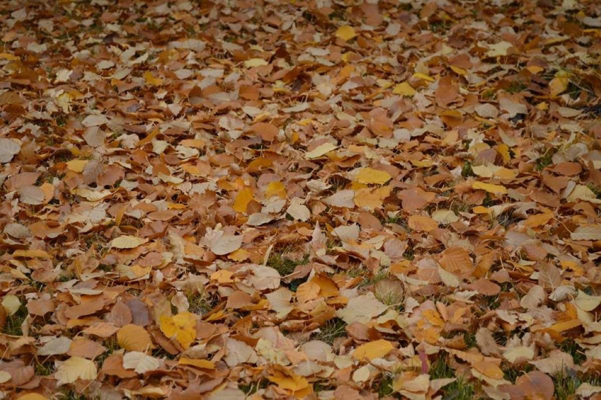 Looking at a blanket of leaves over your backyard? The Nature Conservancy of Canada says there are a lot of good reasons to leave them there. Photo: Christopher Roden