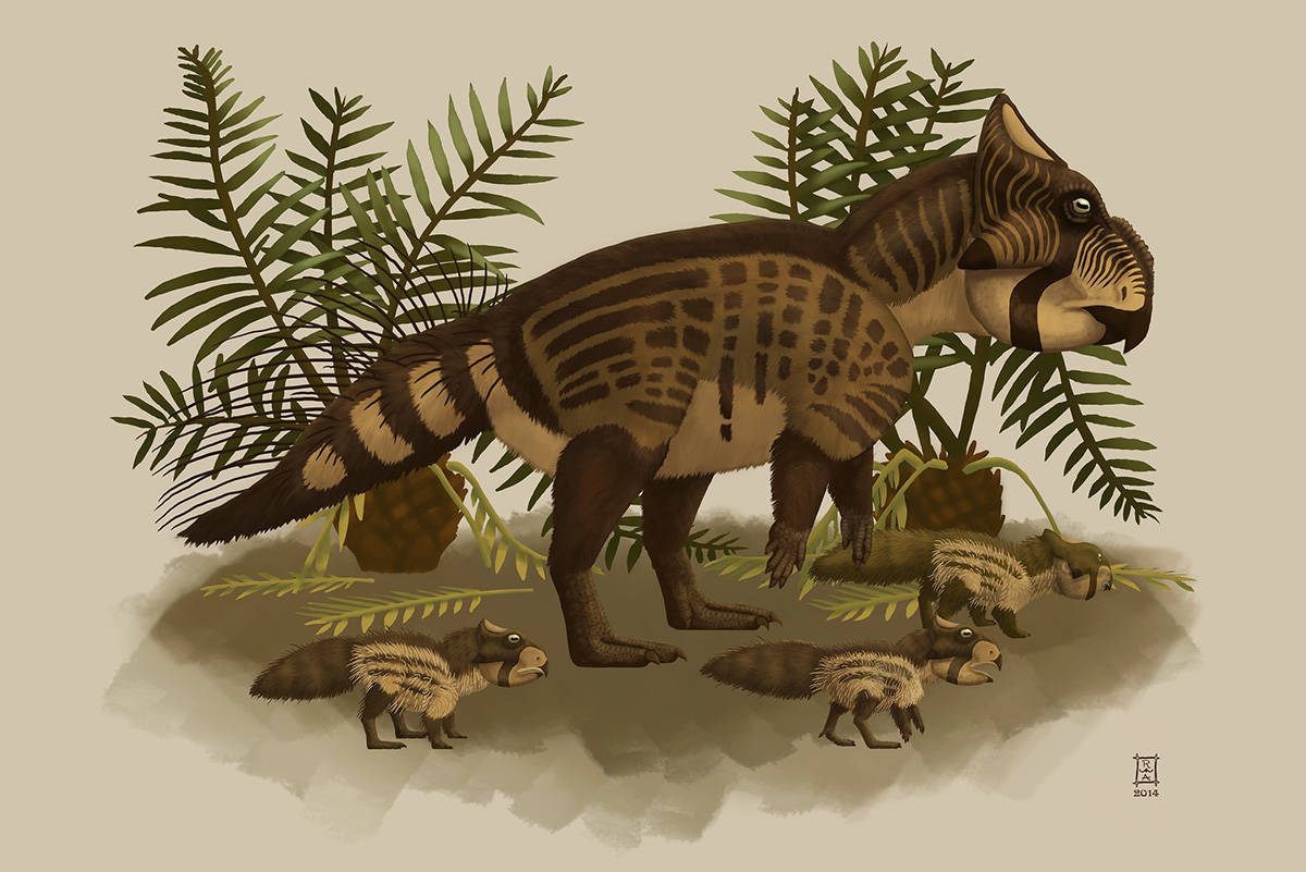 The discovery of a new dinosaur species, the first unique to B.C., has been confirmed by a Victoria palaeontologist. (Photo Courtesy of the Royal BC Museum)