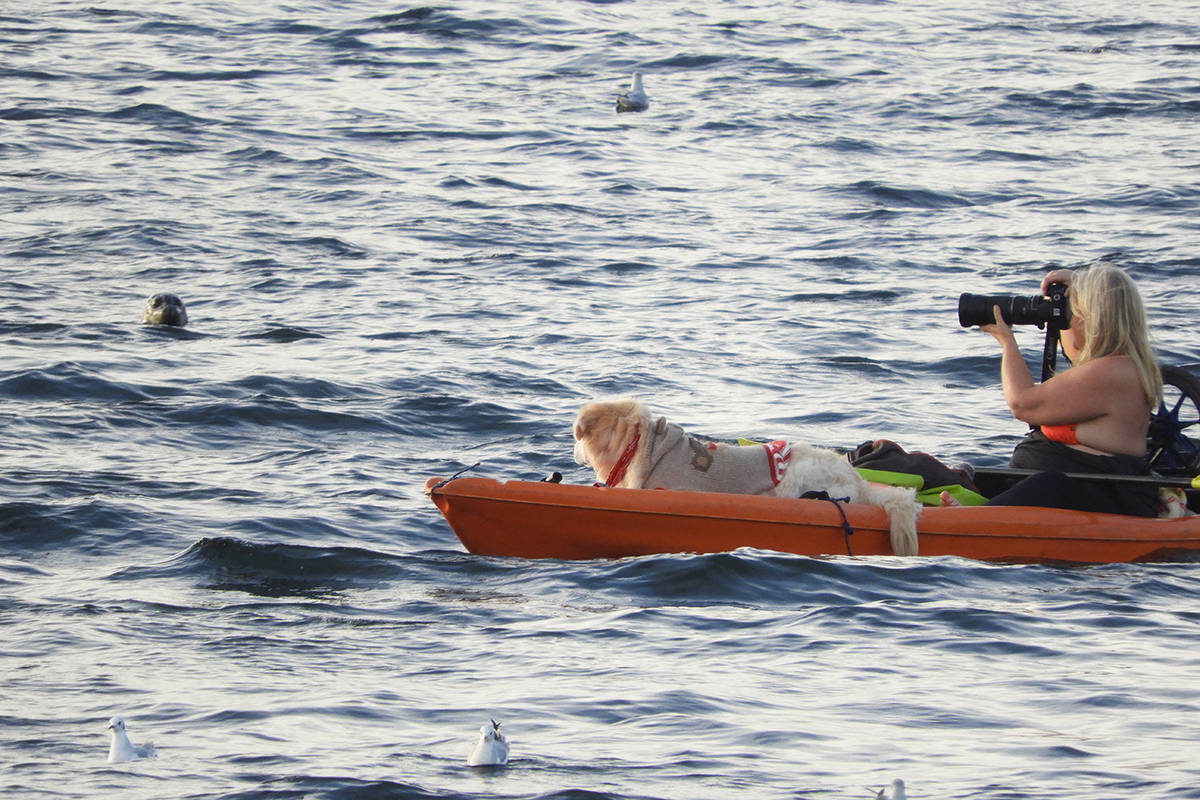 Lori Anonby brought her dog scout to enjoy the White Rock seals on Saturday. (Christy Fox photo)