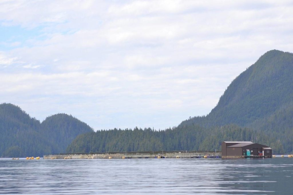 Four Cermaq Canada fish farm sites near Tofino are experiencing fish mortalities as a result of an algae bloom. (Westerly File Photo)