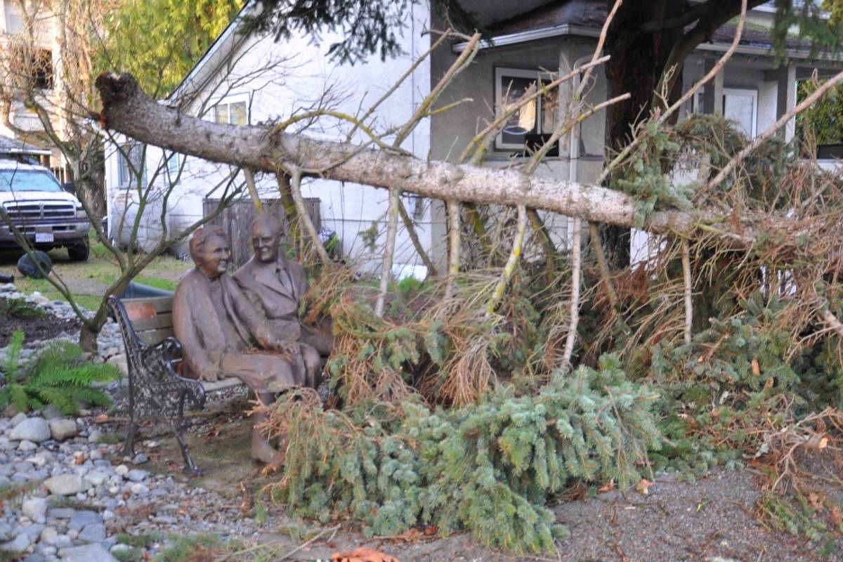 FILE – Like much of the Cowichan Valley, Chemainus saw falling trees and power lines as a result of the December 2018 storm. (Warren Goulding/Citizen)