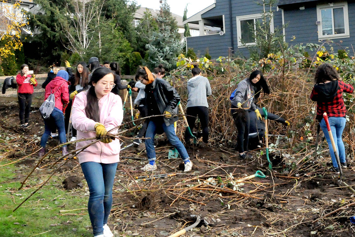 VIDEO: Volunteers clear away invasive plants in Langley park