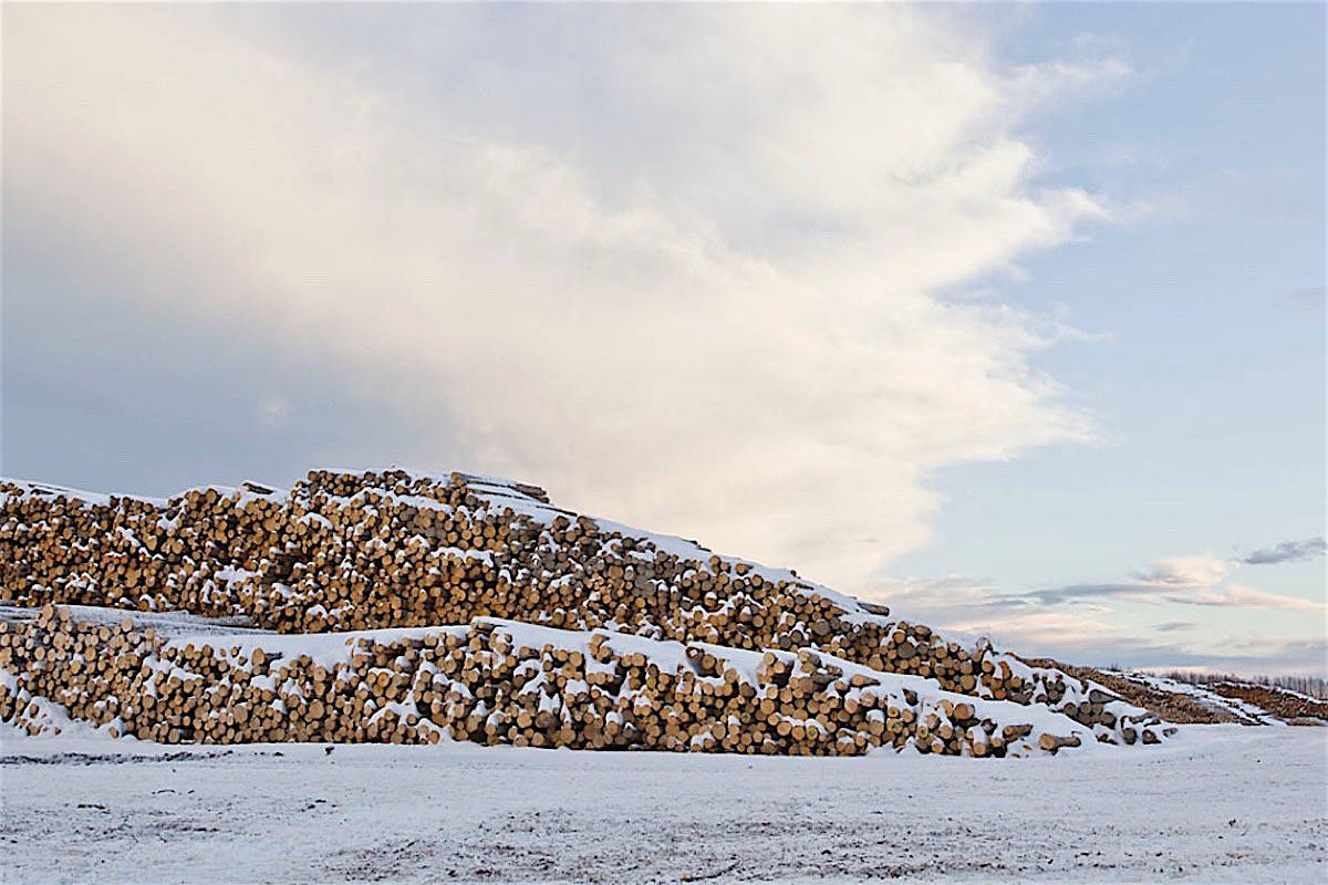 Log stockpiles like this one at a Canfor a sawmill in Prince George have diminished due to reduced harvest. (Canfor Corp.)