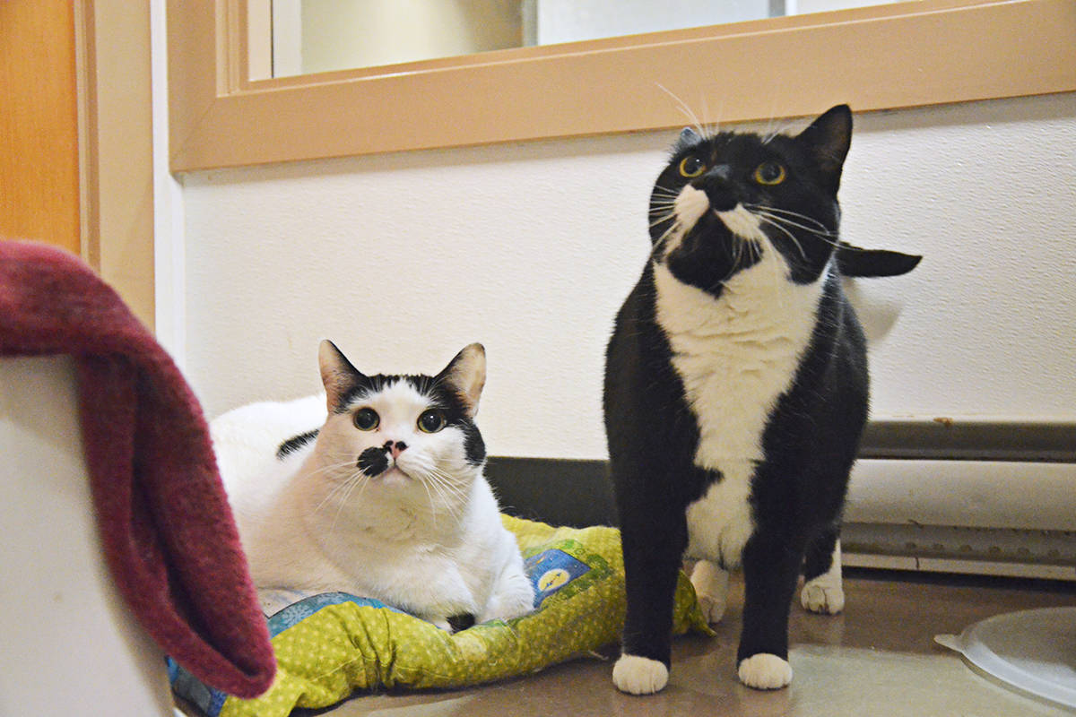 Hannah and Shoshanna are in need of a home. (Matthew Claxton/Langley Advance Times)