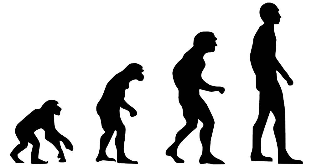 Evolution. (Wikimedia Commons)