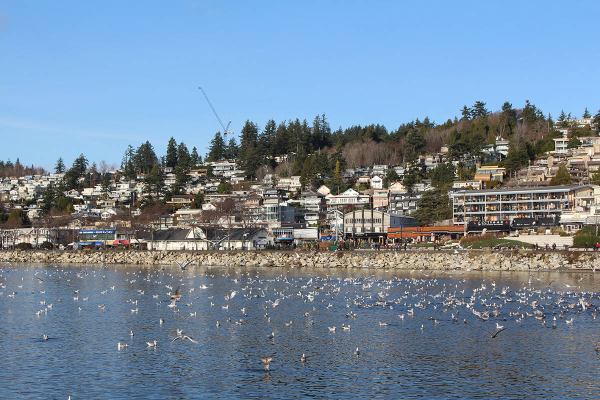 Seals, sea lions and seagulls have had plenty to eat off White Rock's pier. (Justin Hill photo)