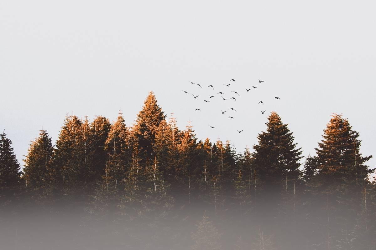 B.C. trio hopes to revolutionize tree planting industry