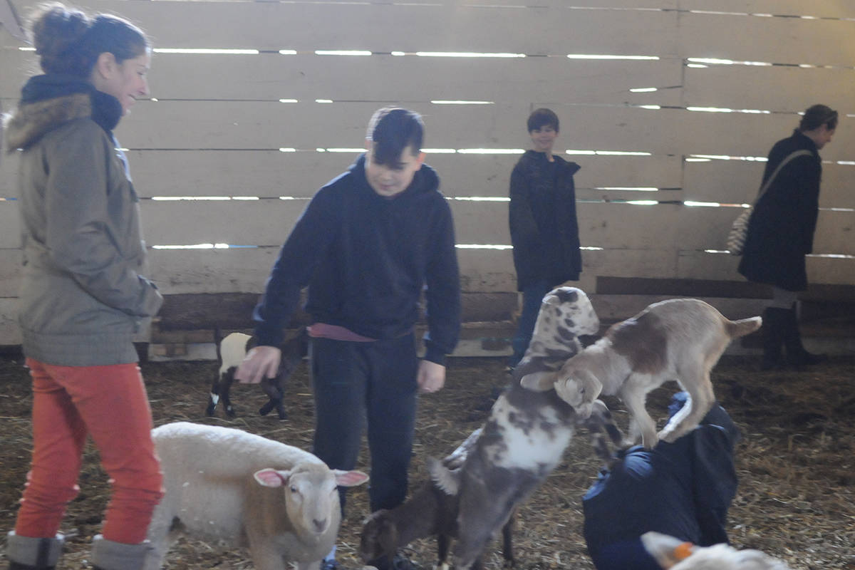 Langley farm celebrates the holidays with goats, trees, and a roaring outdoor fire