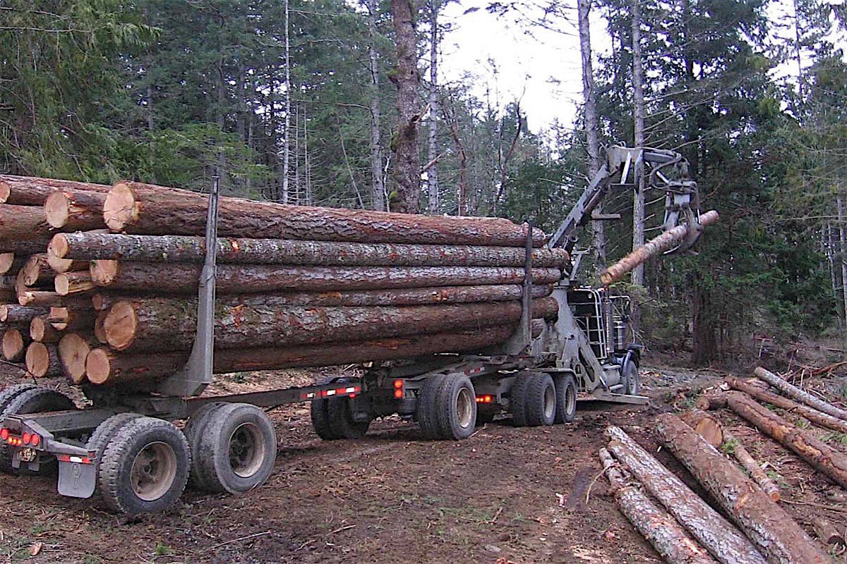 Coastal logging activity is down since the B.C. NDP government began implementing its revitalization plan. (Black Press files)