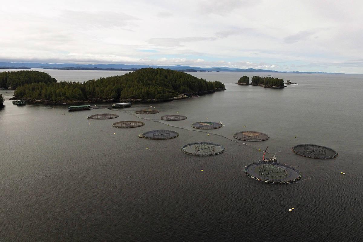A Mowi Canada West fish farm off the B.C. coast. (Mowi Canada West)