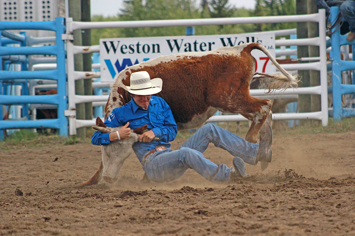 """'True grit' by Millar Hill with the 100 Mile Free Press. """"It was my first experience attending a rodeo. I had never seen something like it before and I couldn't believe these men were wrestling these steers."""""""