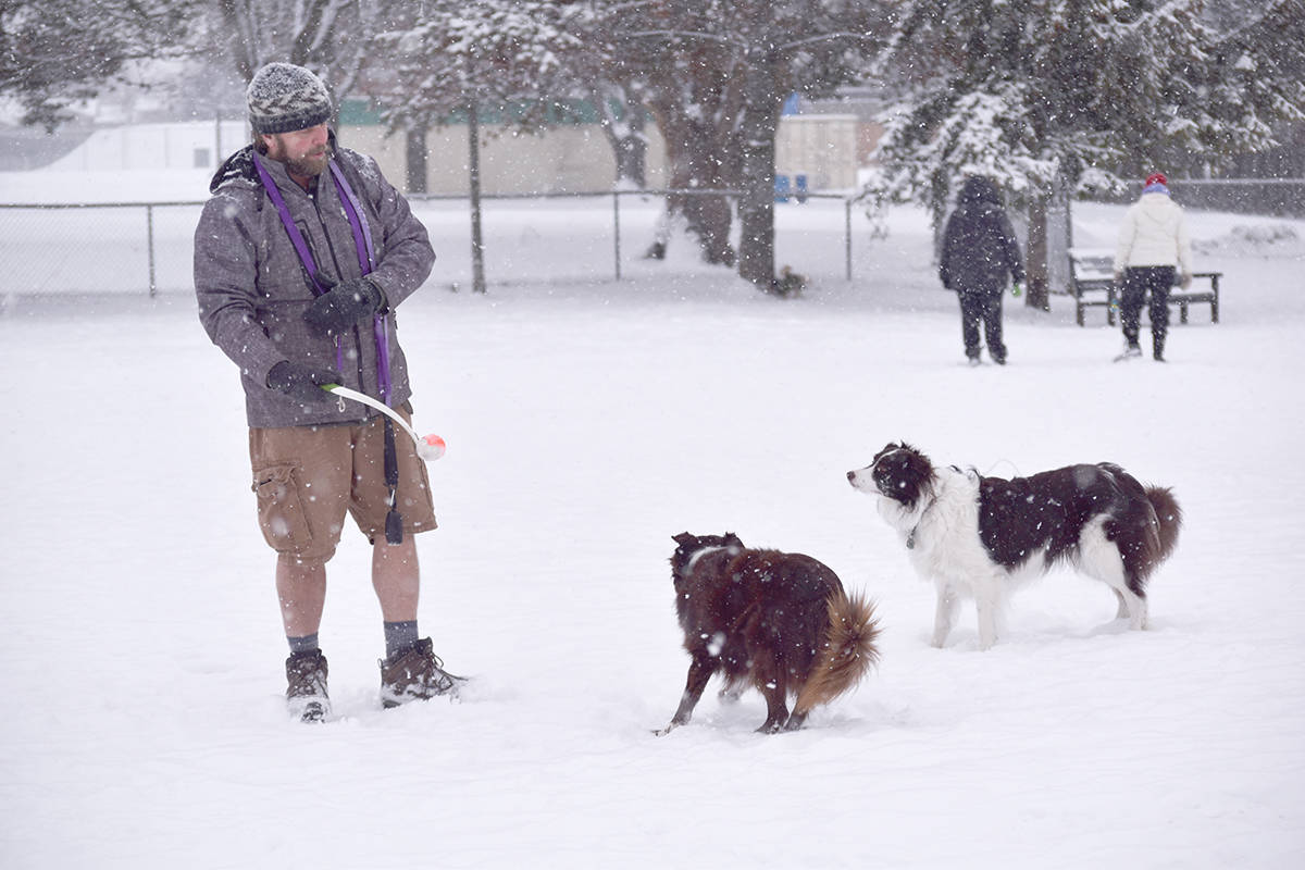 Dean Martin and with his two border collies, Zoe (left) and Josie, don't mind the snow while playing catch in the dog park next to the Kelowna Family YMCA in February 2019. (Carli Berry/Capital News)