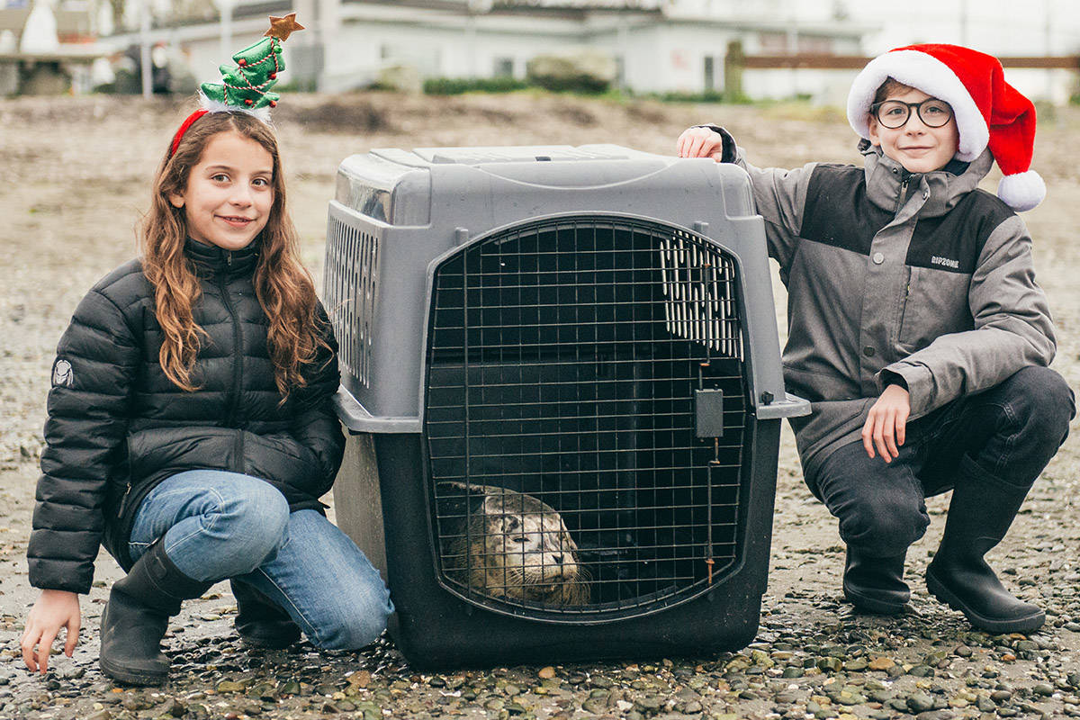 Langley actor Jacob Tremblay and his sister Erica released rehabilitated seal pups on a B.C. beach earlier this month. (Sarah Ellam/Special to the Langley Advance Times)