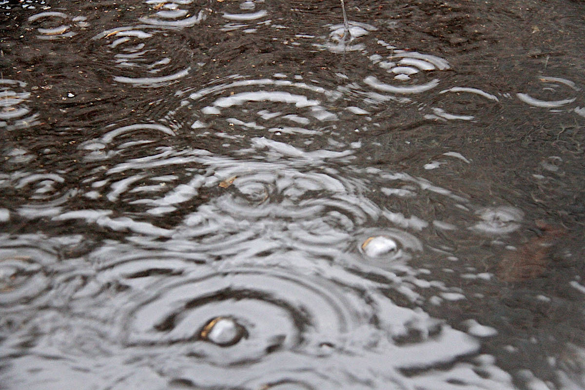 Heavy rainfall is expected through much of the day in Langley, according to Environment Canada. (Keili Bartlett – Black Press Media)                                Environment Canada calls for rainy weather for the next week in Victoria. (Keili Bartlett/News staff)
