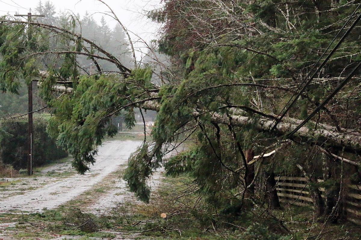 When the wind howls, trees can come down and bring power lines with them. (Lexi Bainas/News Staff)