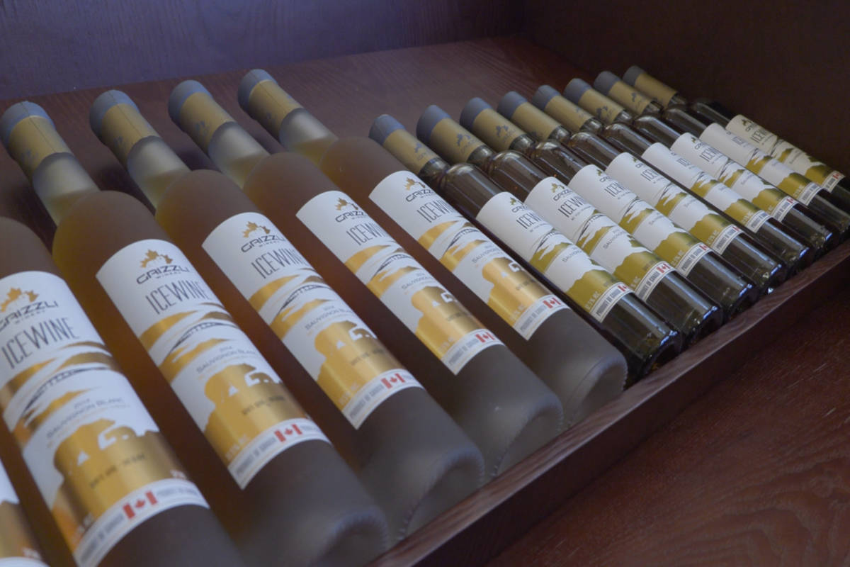 VIDEO: Cold snap brings ideal conditions for Okanagan icewine