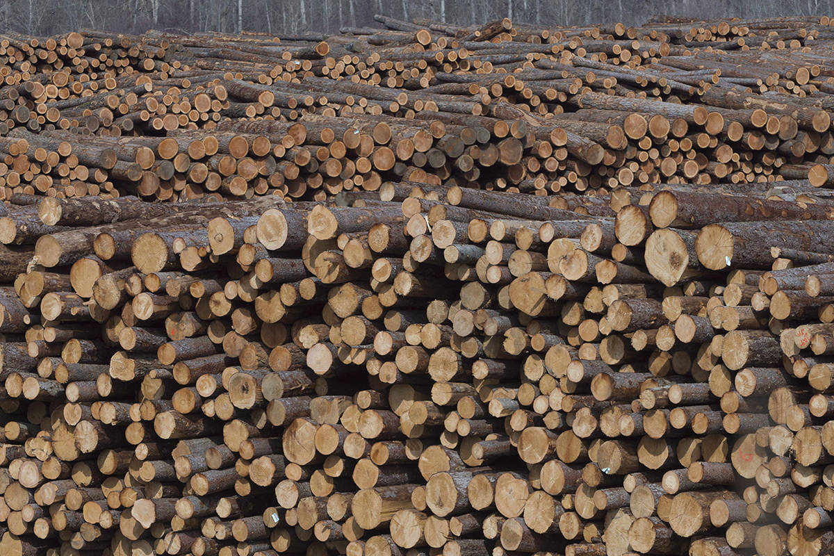 Softwood lumber is pictured at Tolko Industries in Heffley Creek, B.C., on April, 1, 2018. The crisis facing British Columbia's forest industry is intensifying as markets decline, mills shut and a strike involving 3,000 forestry workers enters its seventh month. The multiple threats are deeper than the global meltdown of 2008 and may rival the damage wrought by B.C.'s 1980s recession, setting off massive industry restructuring, says an insider who is hearing from many people on the brink of financial collapse. THE CANADIAN PRESS/Jonathan Hayward